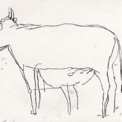 greedy calf